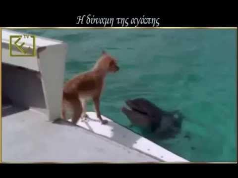 Дельфины-наши друзья Save the dolphins! (η δύναμη της αγάπης)