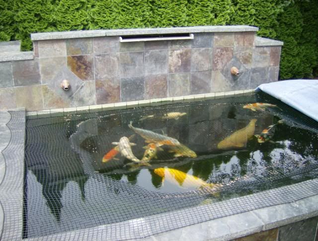 Protection Over Pond Fish Pond Ideas Pinterest Fish