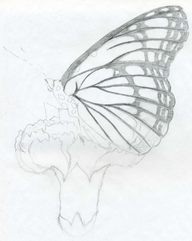 Drawing | Easy Butterfly Pencil Drawings