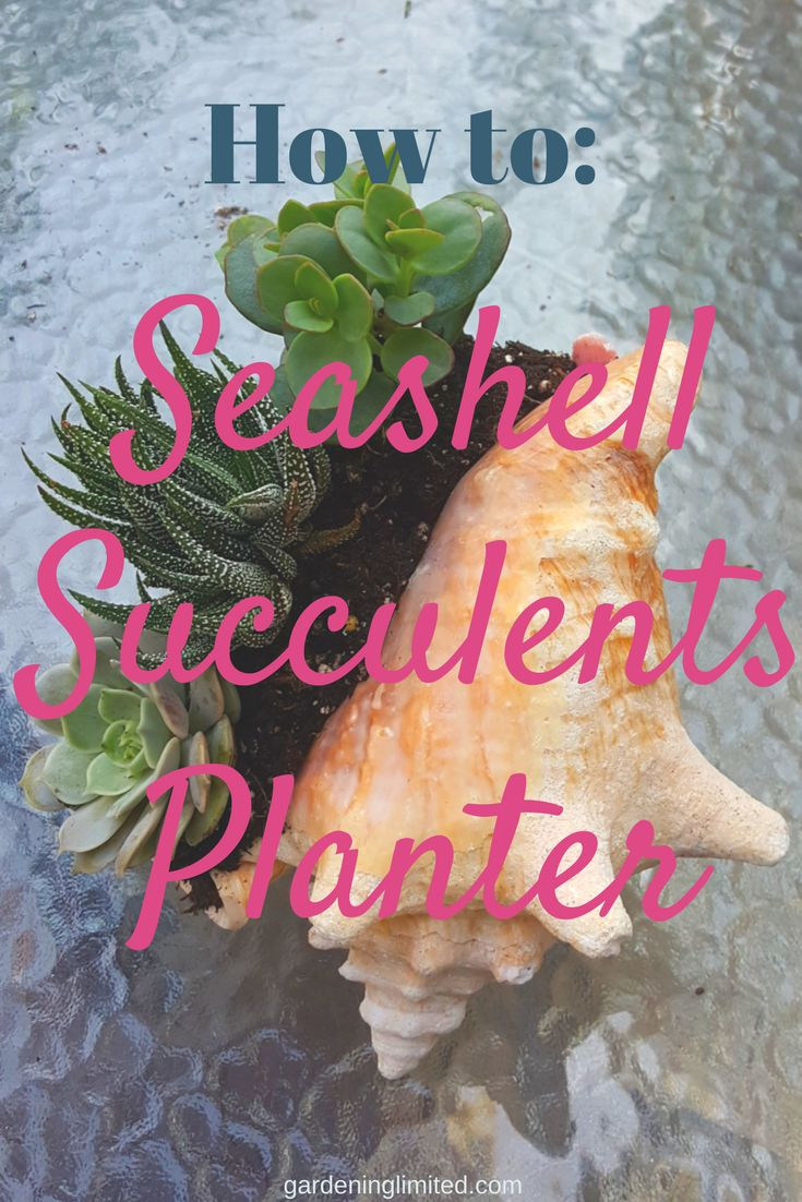 Want to learn how to make your very own seashell succulents planter? Read my step by step guide! #planter #succulent #seashell