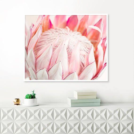 King Protea Print Pink Flower Photos Protea prints
