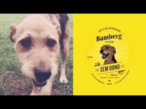Vídeo lançamento da cerveja Sem Dono da Bamberg em prol da ONG Adote um Focinho