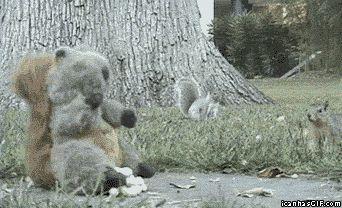 funny gif | funny-gif-squirrel-stuffed-animal