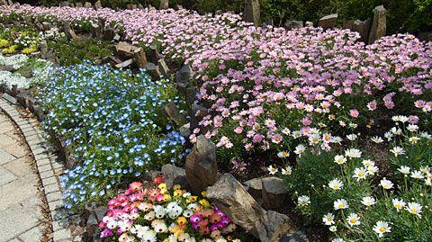 |草津市立 水生植物公園みずの森 指定管理者 近江鉄道ゆうグループ