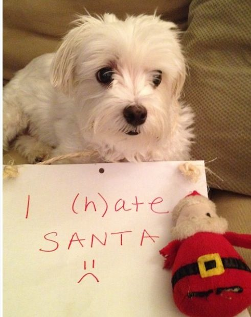 "Eva ""hated"" her Santa as well. She chewed his hat off and pulled out all of the stuffing. :/"