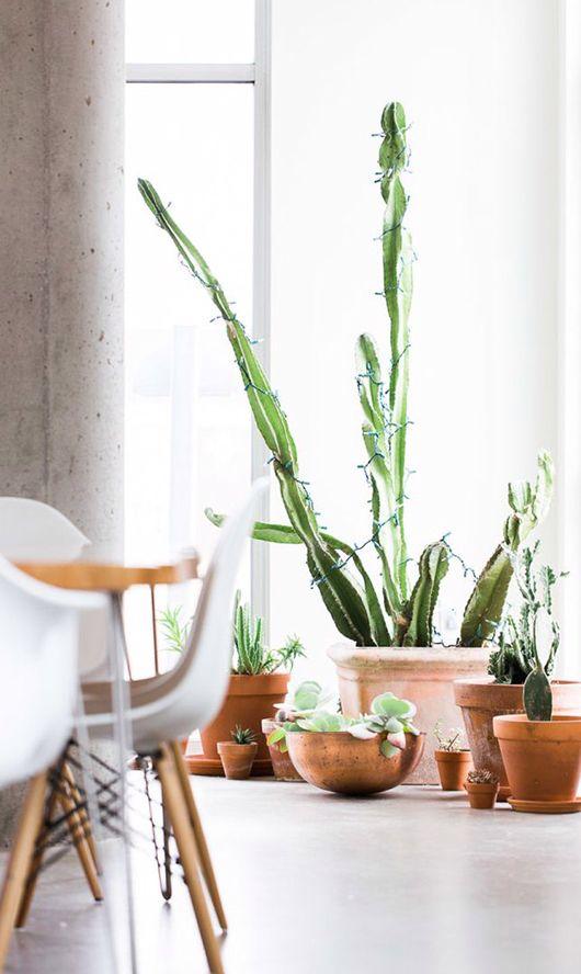 Inred med kaktusar! #kaktus #inredning #detaljer #skandinavisk inredning #ljust #vitt #växter #fönster