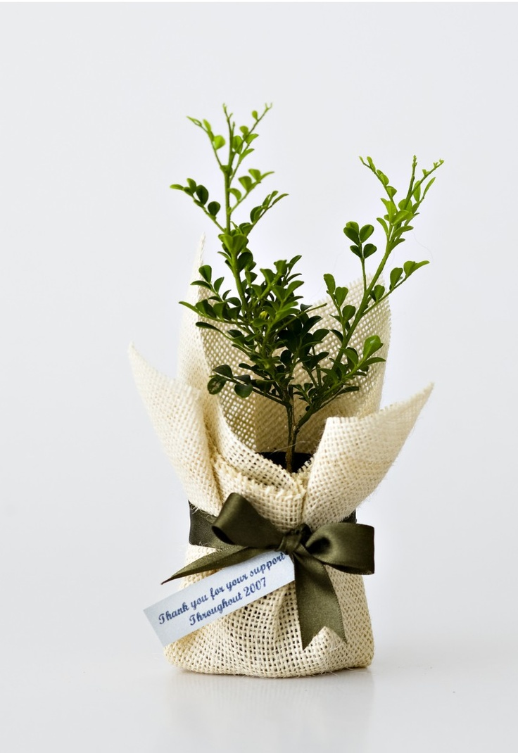 108 best plants gift images on Pinterest | Weddings, Bonsai and Favours
