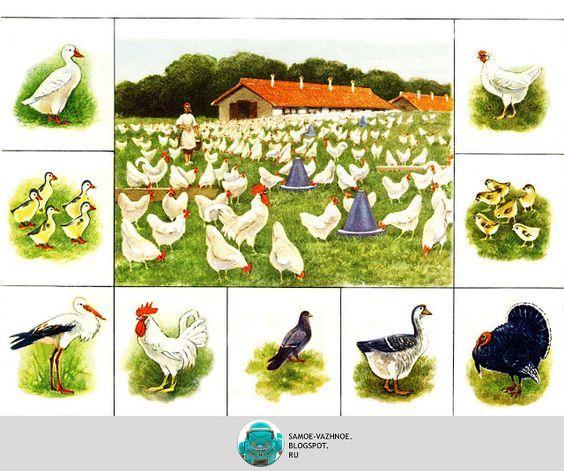Artist Vadim Trofimov szovjet játék társasjátékok illusztráció V. Trofimova gyermekek Állatkert lottó társasjáték állatok vadállatok állat festő Vadim Trofimov művészek a szovjet Haszonállatok baromfi