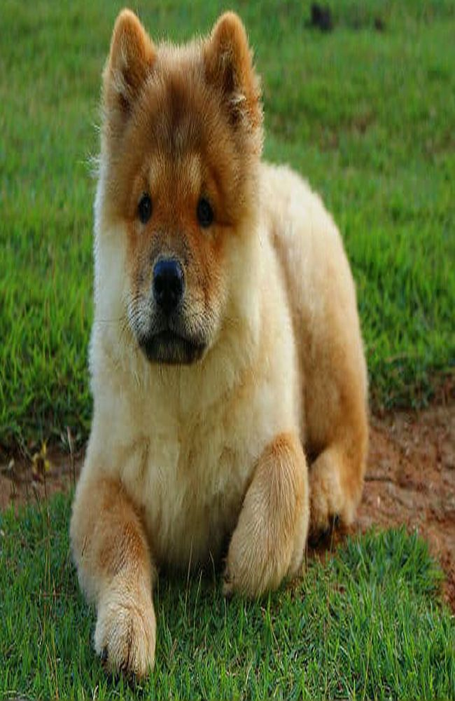 10 Dog Breeds That You Can Leave Alone At Home Big