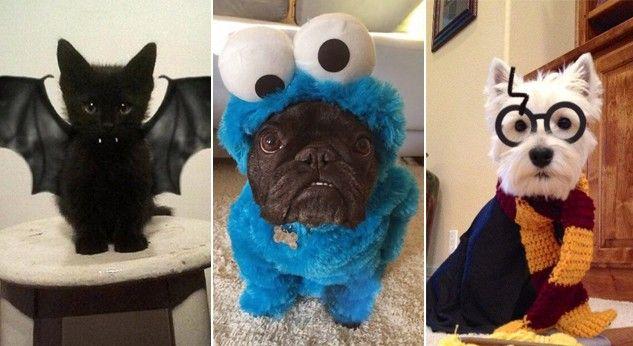 Con estos disfraces tu mascota lucirá muy divertida en la celebración de Halloween.