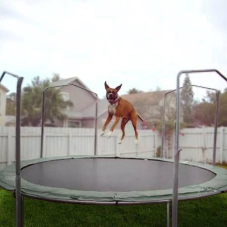 Animals Jumping On Trampolines (Video)   Karen Wild on 106.1 KISS FM Seattle