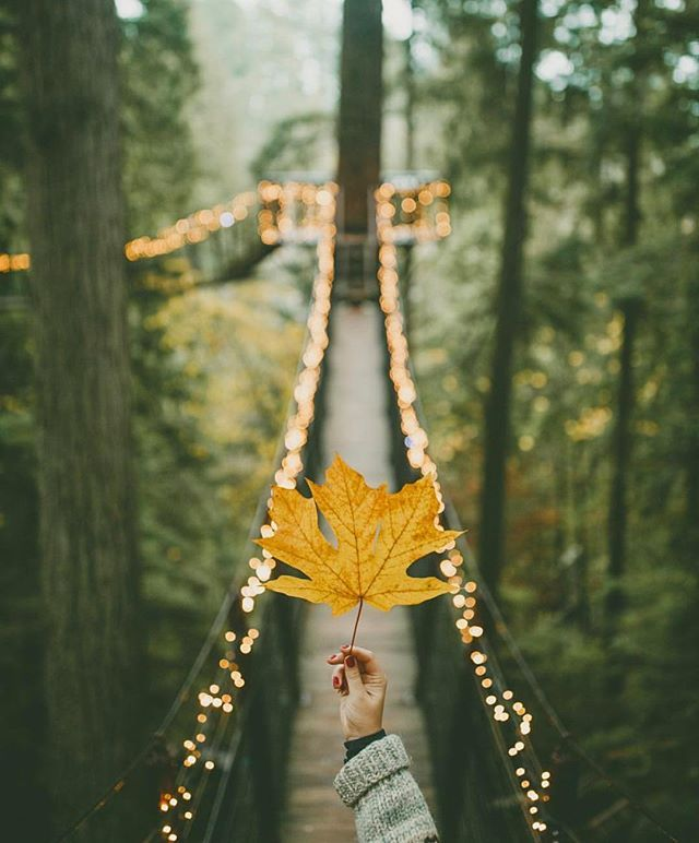Fall, you're beautiful. by @rachelbarkman