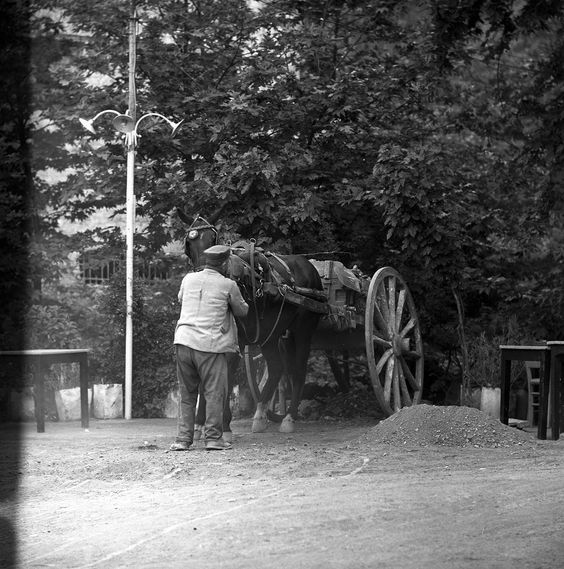 Livadeia, Greece May 1959 man with horse-drawn cart. set includes photographs of central greece, in and around the city of livadeia. from nick and maggie's spring 1959 trip to europe.   part of an archival project, featuring the photographs of nick dewolf
