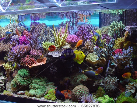 Coral aquarium corals aquariums pinterest for Aquarium coral decoration