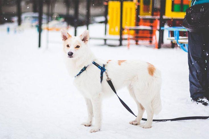 Выставка собак из московских приютов #всемпособаке « FotoRelax