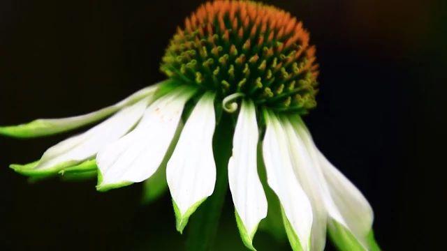 Flowers - Google+