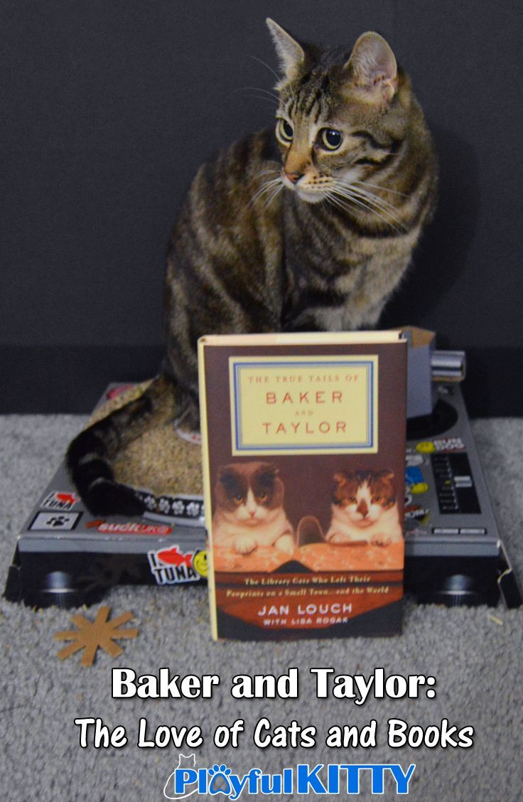 Baker And Taylor: The Love Of Cats And Books