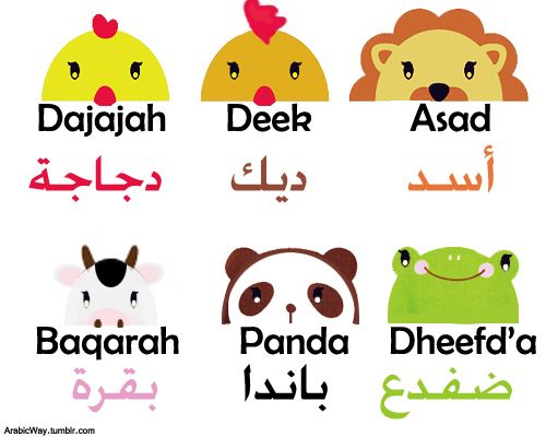 Lion, Rooster, Chicken, Frog, Panda, Cow in Arabic
