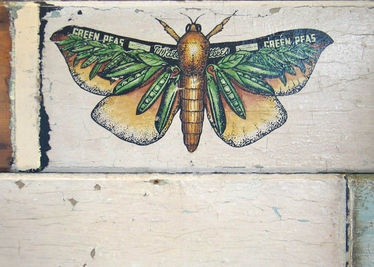 Philippa Bentley  Puriri Moth Art on Weatherboard Unframed