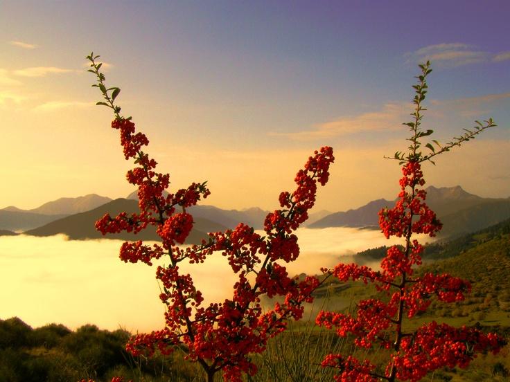 #Montana #Greece #Karpenisi