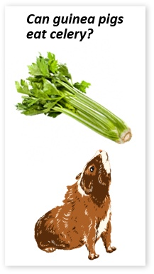 High Vit C Foods For Guinea Pigs