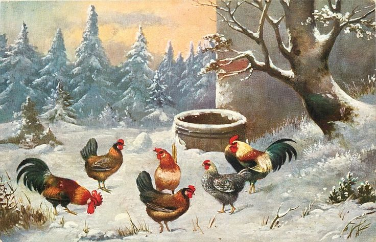 253 best Cool Coops! images on Pinterest  |Winter Scenes With Chickens