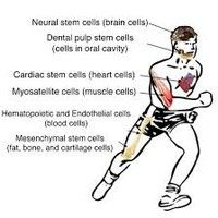 Exercise Rescues Mutated Neural Stem Cells by Andre Smuts 1 on SoundCloud