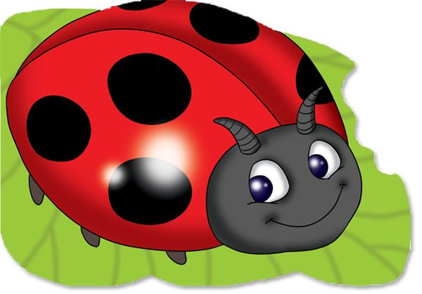 Picture of Ladybird