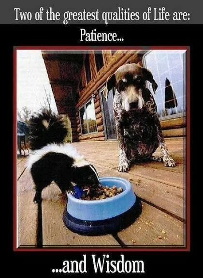 Image result for dog waiting to eat while skunk
