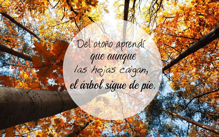 """""""Del otoño aprendí que aunque las hojas caigan, el árbol sigue de pie"""" #otoño #motivacion #frasechula #animo #retos #superacion"""