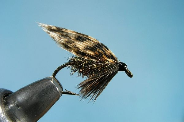 Alder alderfly wet fly fishing flies pinterest for Wet fly fishing