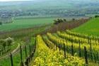 Colutta wines
