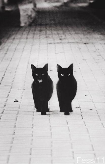 Double trouble.: Kitty Cat, Best Friends, Catwalks, Cat Walks, Black Kitty, Bad Cat, Black Cat, Blackcat, Baby Cat