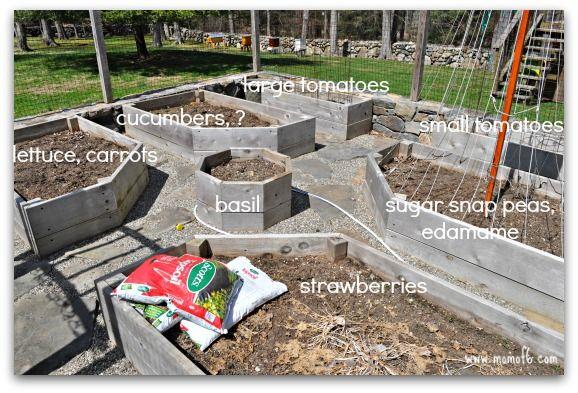 Backyard Vegitable Gardens | Backyard Vegetable Garden Plan 500x339 Planning the Backyard Vegetable ...