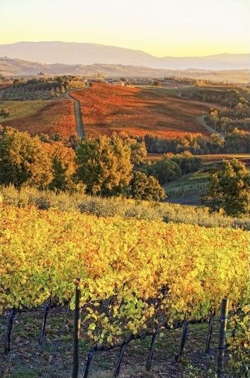 Autumn Vineyards near Montefalco in Umbria, Italy | @InUmbrie