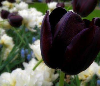Flores Negras, parte 1