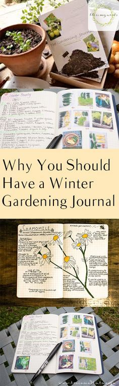 Why You Should Have a Winter Gardening Journal - Bless My Weeds|