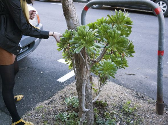 How to steal and propagate succulents