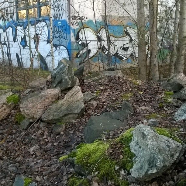 Where the neon turns into wood... ~Ish #streetart #streetphotography #forest #suburbia #kraffiti #graffiti #katutaidetta #Helsinki #katutaide 5/12/16 #itäHelsinki #iistimpää #pöhinää #klotter #töherrys #mettä #metsä #mehtä #kiviä
