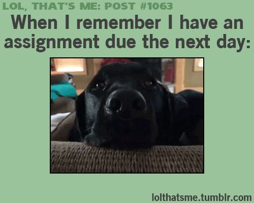 These Adorably Dramatic Dogs Have Mastered The Art Of The Guilt Trip. Prepare To…