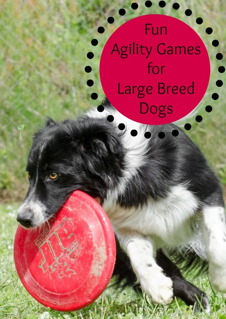 Fun Agility Games for Large Breed Dogs Large dog breeds