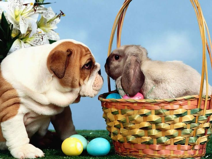 Foods that are poisonous to pets at Easter