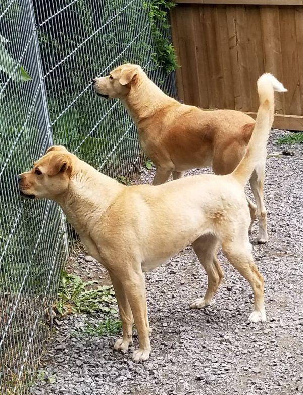 Dogs For Adoption Near Toronto On Petfinder Dog Adoption Pet Adoption Animal Projects