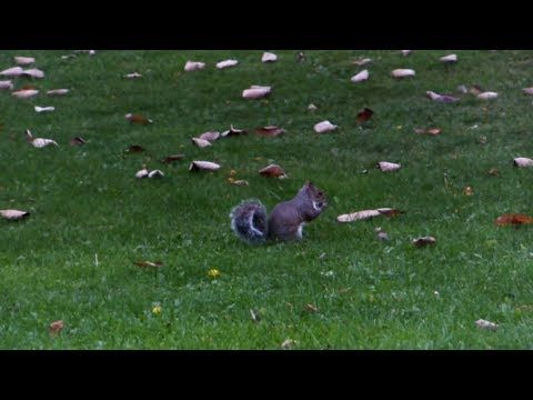 Pannett Park Squirrels - October 2017