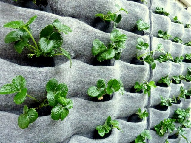 strawberry wall! from http://homegrown.org/blog/2010/03/plants-on-walls-an-easy-vertical-garden-design/