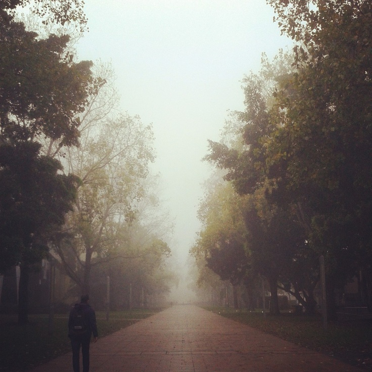 Misty #morning at UNSW - University Walk
