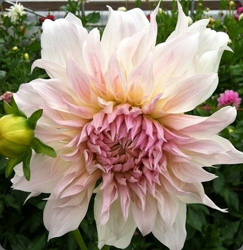 Scarlet Flower Crossword Clue 9 Tips For Planning The Herb
