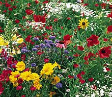 Wildflowers:)