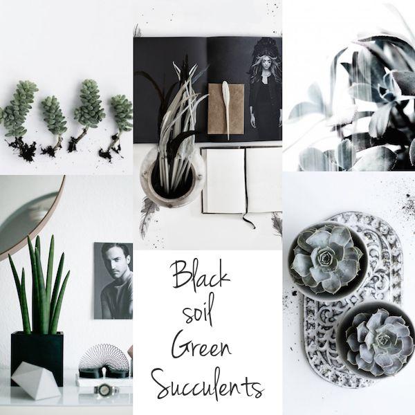 A green moodboard | Succulents