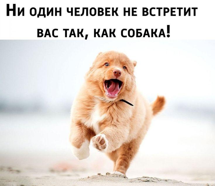 смешные животные картинки с цитатами